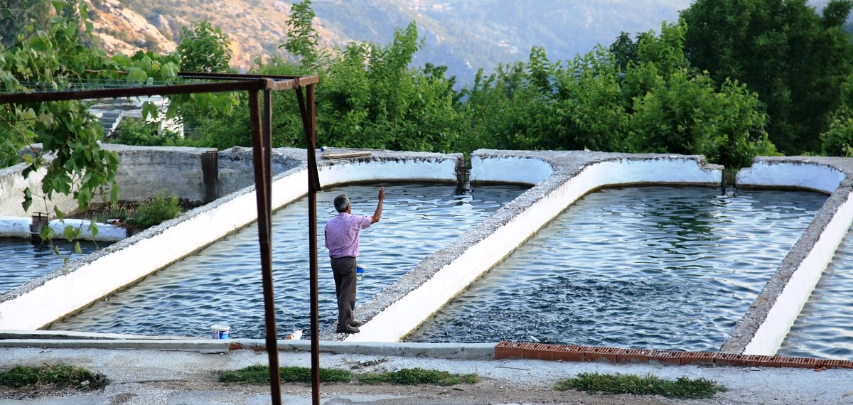 Trout farm in Bodamya, Islamlar