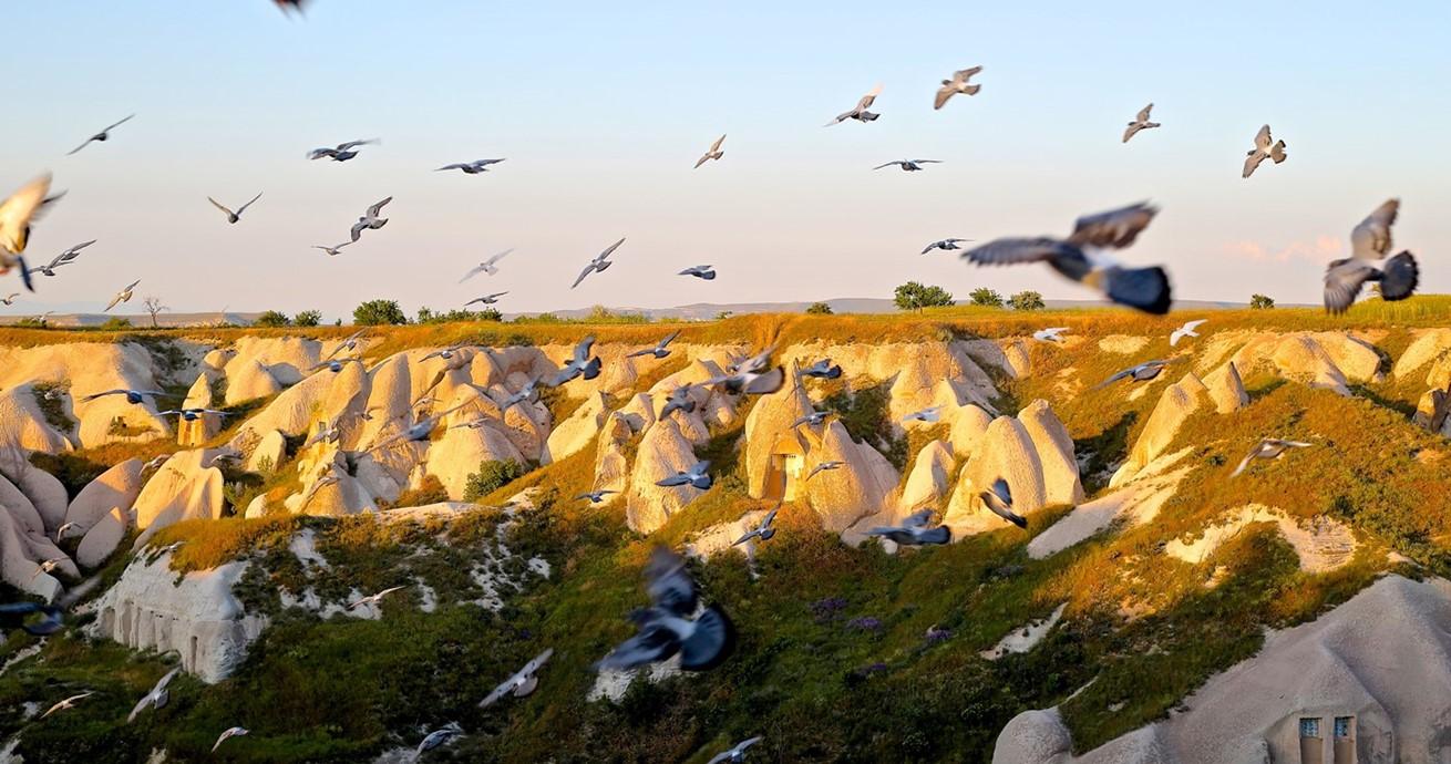 Birds Flying Over Cappadocia Turkey