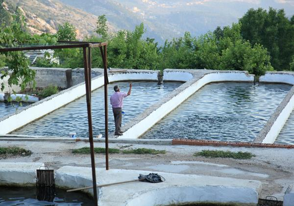 Trout farms in Islamlar