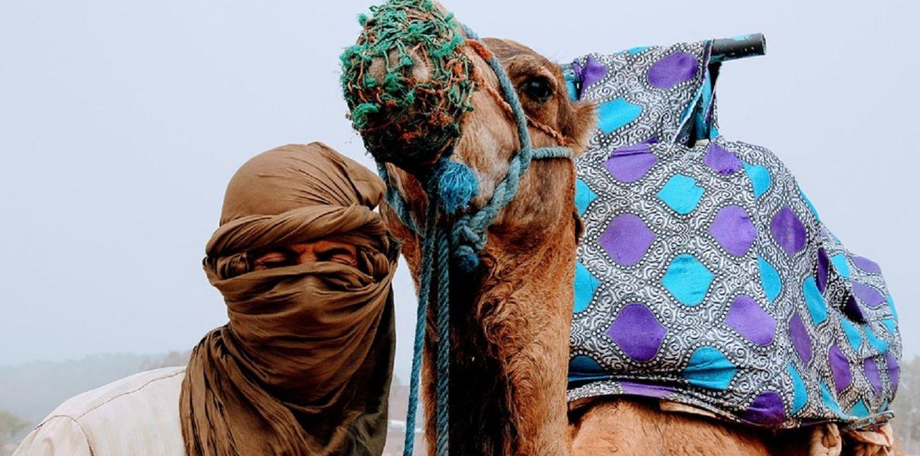 Camel 2465551 960 720